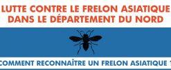 Lutte contre le frelon asiatique dans le département du Nord